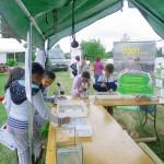 Découverte des invertébrés aquatiques avec le Centre EDEN