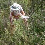 inventaire de la prairie