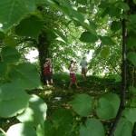 inventaire du sous bois