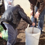 """Avant d'être planté, le jeune arbre est trempé dans le """"pralin"""", mélange d'eau et de terre fertile"""