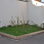 jeunes plants d'essences locales, fourni gracieusement par Botanic