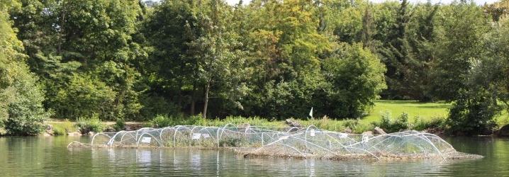 Les radeaux végétalisés