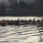 Radeau de la place du Mandarin et un couple de canards