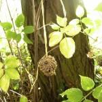 Mangeoire installée dans les arbres