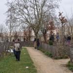 plantation dans les bosquets forestiers - heudelet26